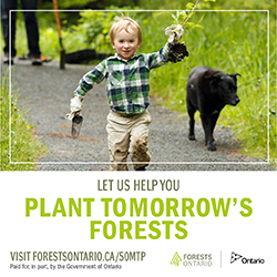 Let Us Help You Plant Tomorrow's Forests | Forests Ontario